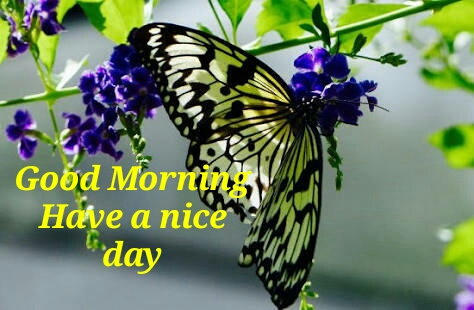 Top 10 Good Morning Good Butterfly Farm Images Greetings Pictures