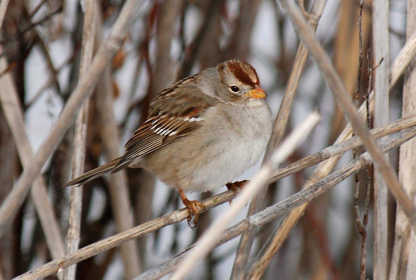 Utah Birders | Birding Blog, Utah Birds, Utah Birding ...