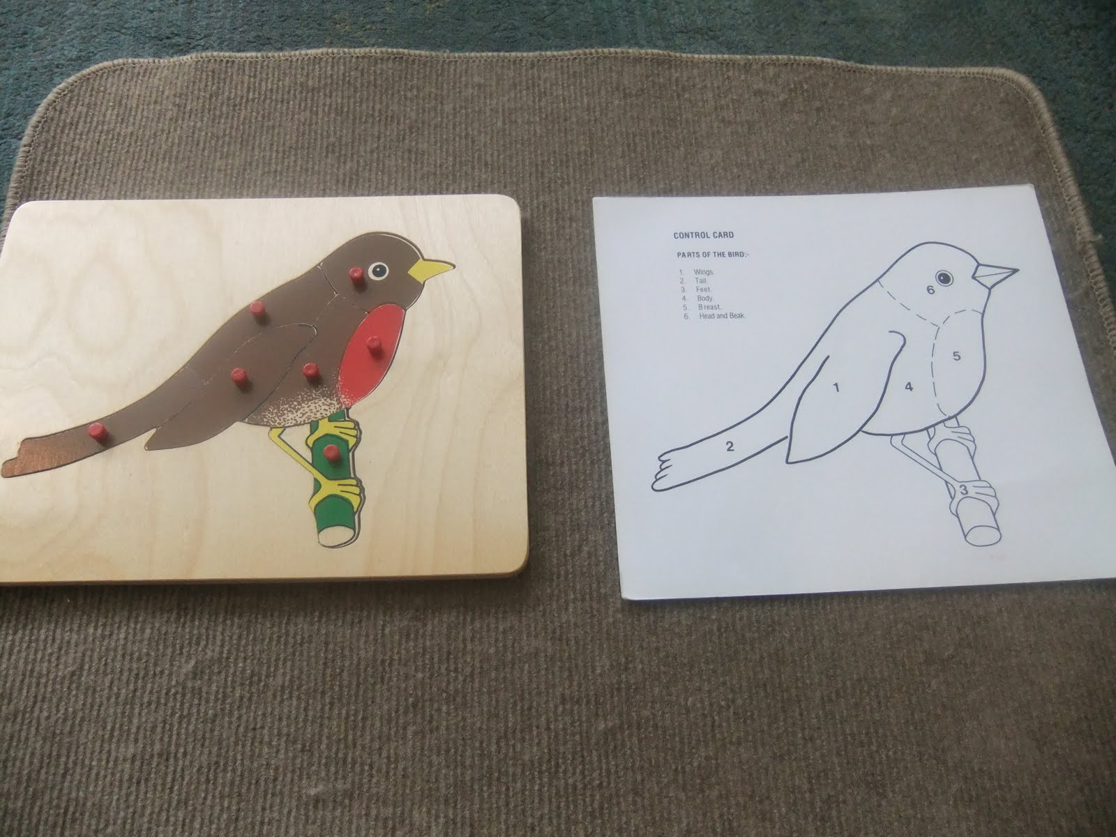 NAMC montessori preschool classroom activities learning about birds bird puzzle