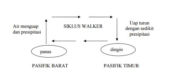 Siklus Walker