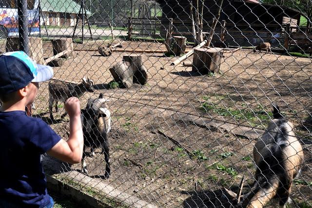 zwierzyniec mini zoo