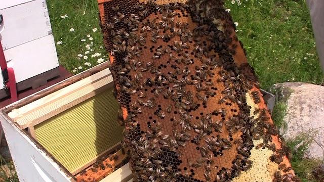 Δημιουργία νέων μελισσιών και ανάπτυξη με καλές βασίλισσες: Μέθοδος Χρήστου Μπέκα