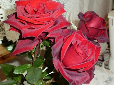 розы DEEP SECRET