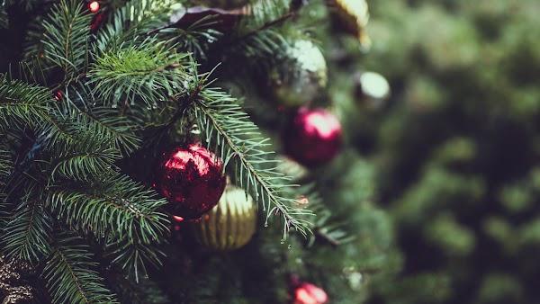 Christmas Tree. Merry Christmas
