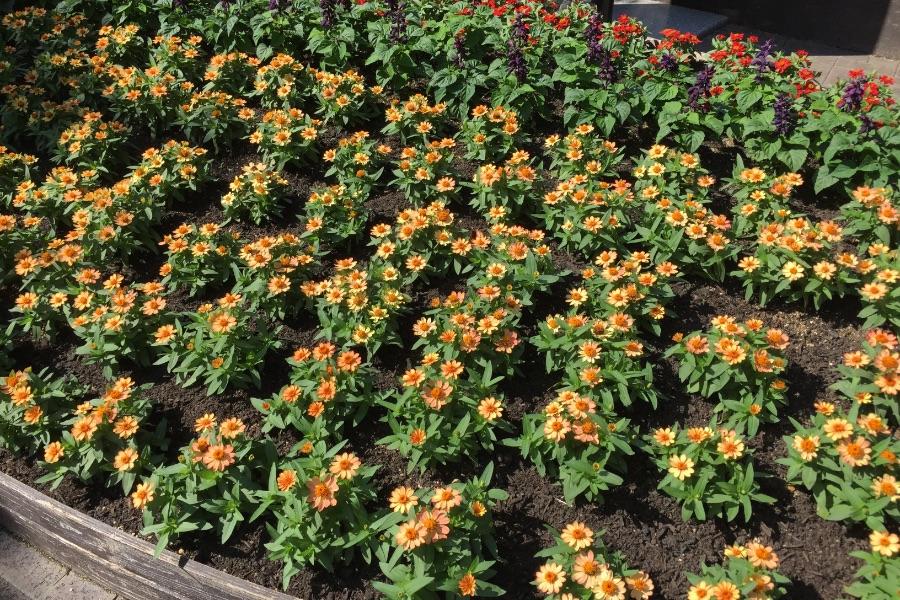 神戸布引ハーブ園の花