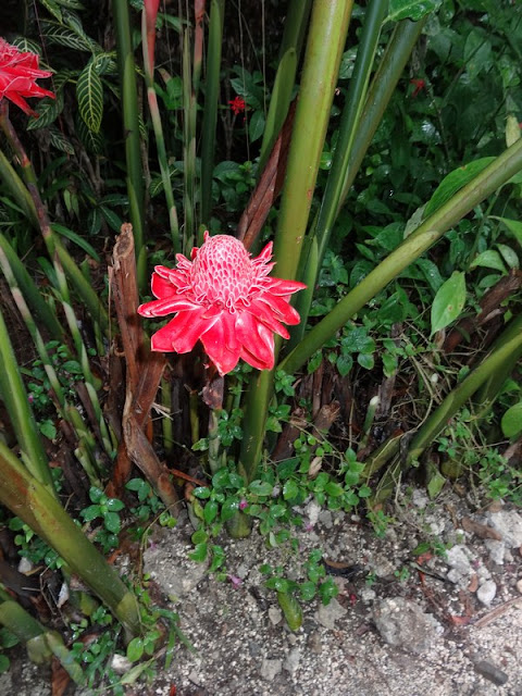 BOHOL : Butterfly Garden / Philippines : 3 jours à BOHOL / www.by-laura.fr