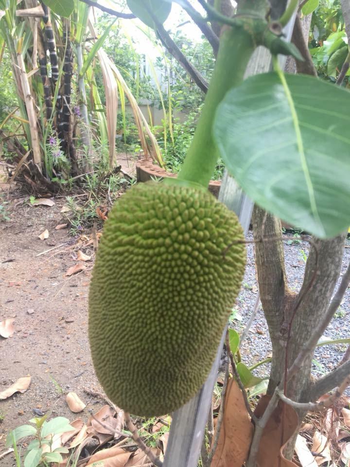 Frutas | Maçã, Melancia, Banana, Mamão, Uva, Jaca, Cacau, Caju, Manga e Goiaba