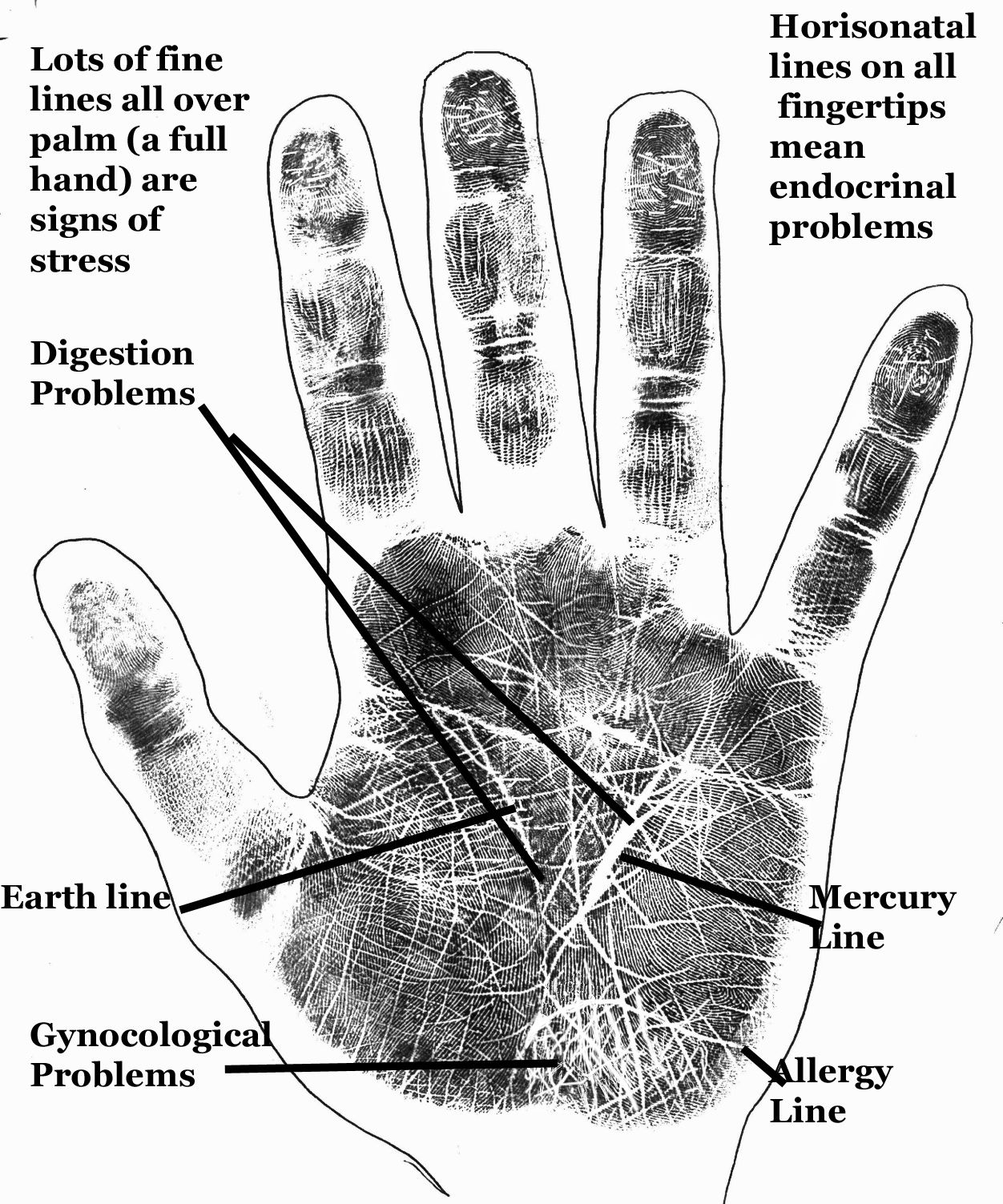 Astrology And Palmistry Portal Palmistry Hands Charts