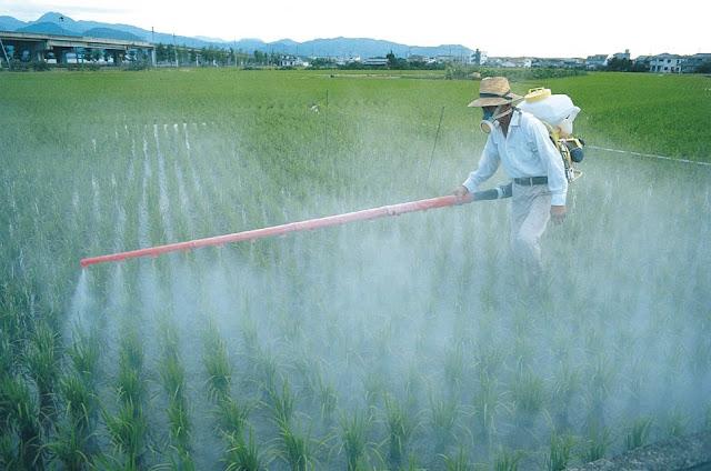 Sản xuất thuốc bảo vệ thực vật