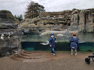 visiting penguins at the zoo