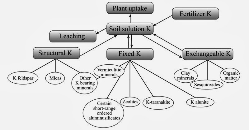 Soil and Environment: Potassium availability in soils