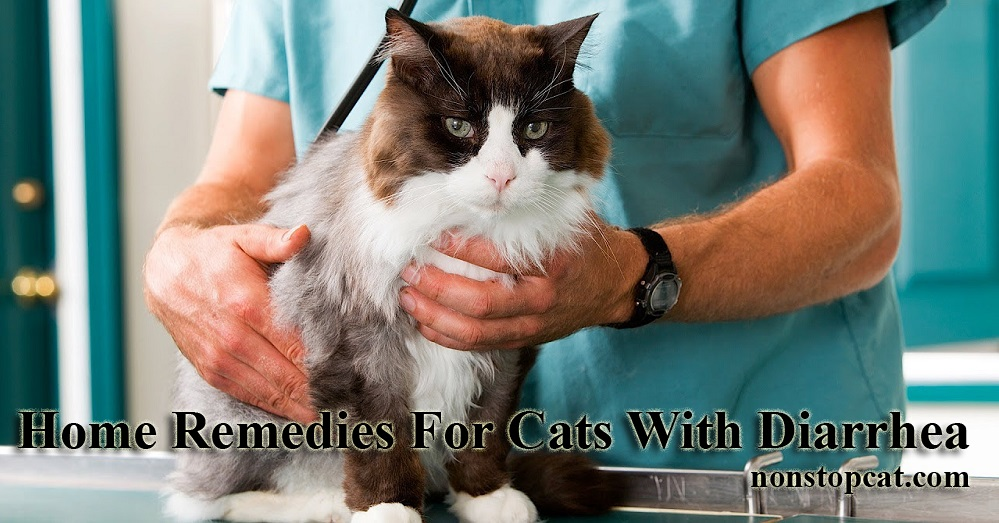 Home Remedies For Cats With Diarrhea