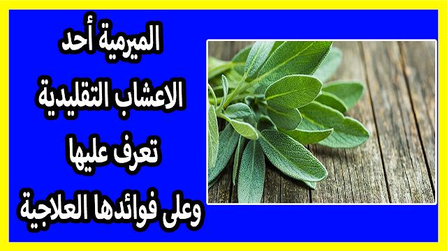 الميرمية أحد الاعشاب التقليدية تعرف عليها وعلى فوائدها العلاجية