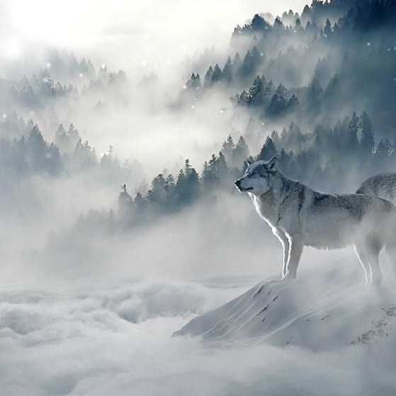 Snow and Wolves Wallpaper Engine