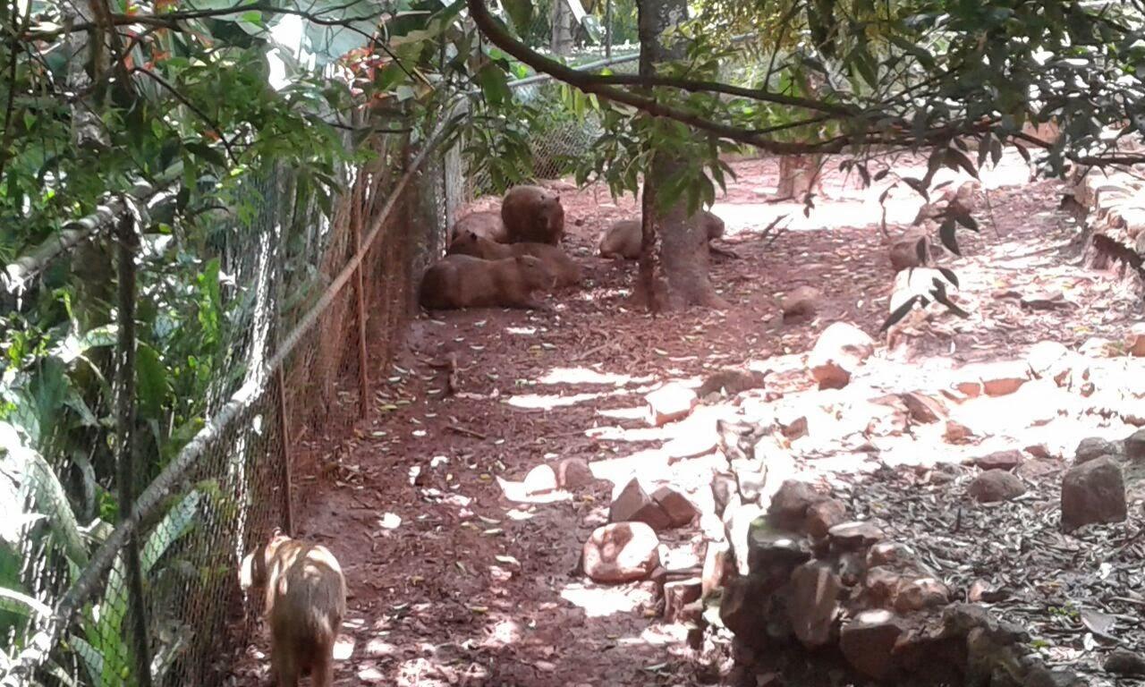 Bosque de Ribeirão Preto