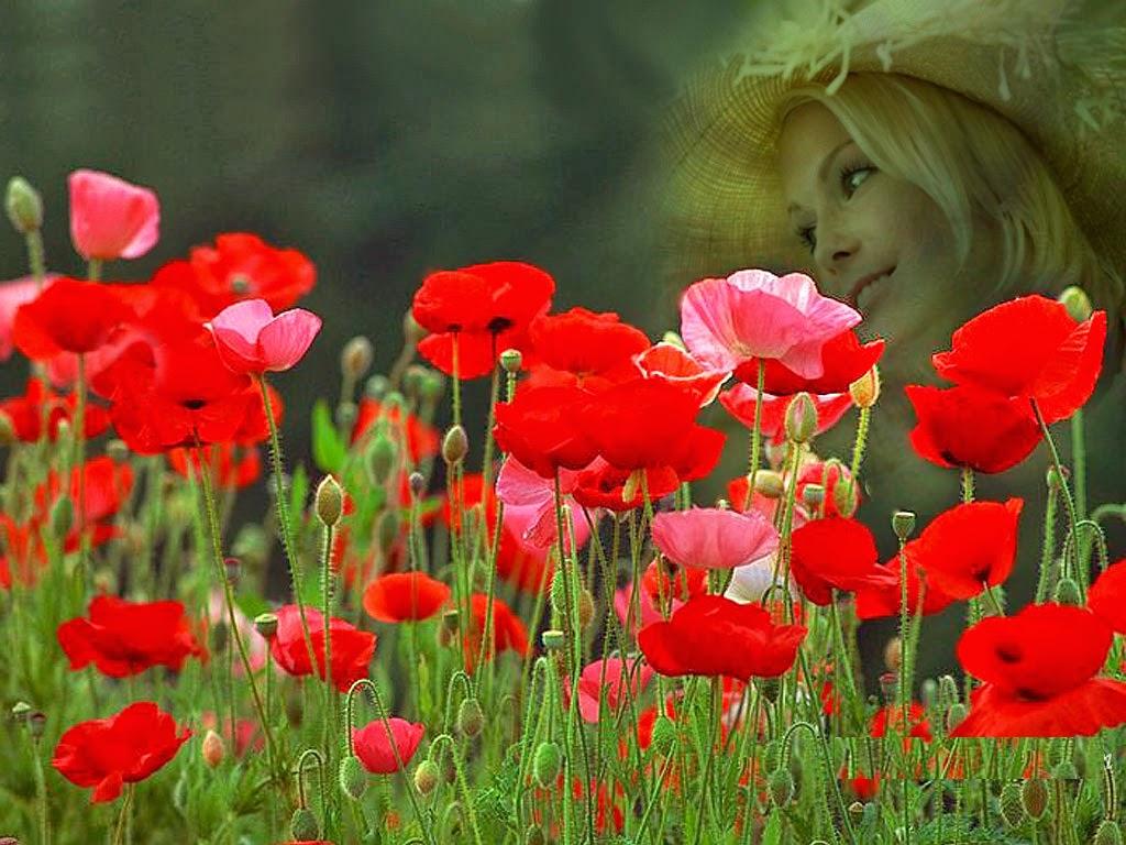Roses In Garden: Red Rose Flower Garden Wallpaper