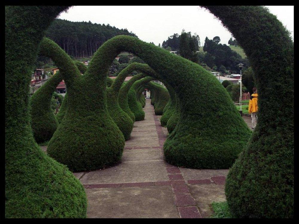 alice in wonderland garden archway amore linguine and me. Black Bedroom Furniture Sets. Home Design Ideas