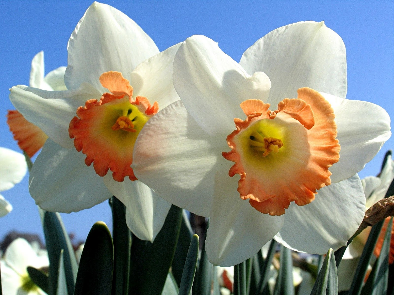 lente achtergronden hd - photo #37