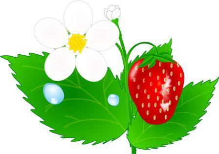 Pictures Of Flowers Clipart