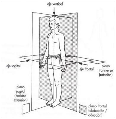 Movimientos musculares del cuerpo humano | Sistema muscular