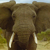 Gajah mengamuk bunuh pelatih zoo di Jepun