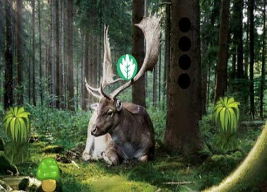 Pine Forest Escape Juego Solución