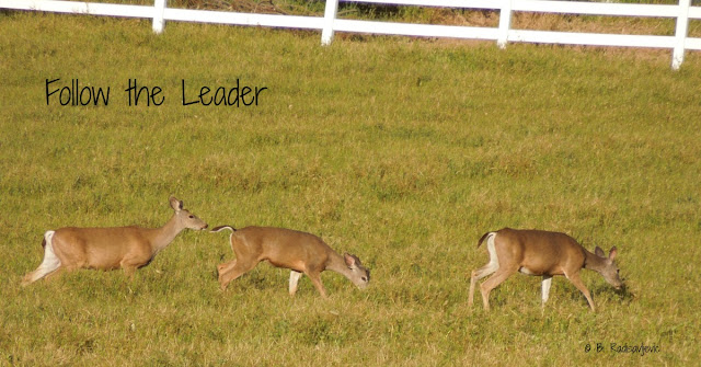 Deer Again