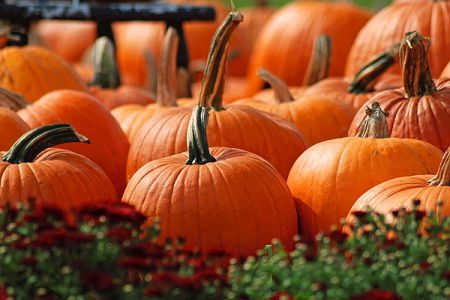 Health Benefits of Eating Pumpkins in Halloween