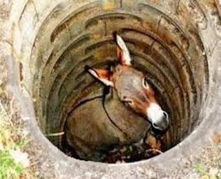 L'asinello caduto nel pozzo