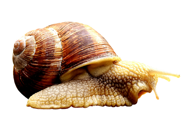 definiția aschelminthes rup condiloamele