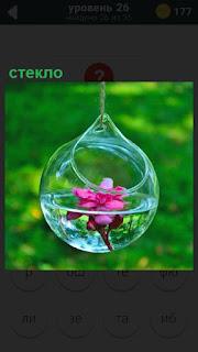 Подвешена ваза из стекла, внутри которой вода и цветок красного цвета