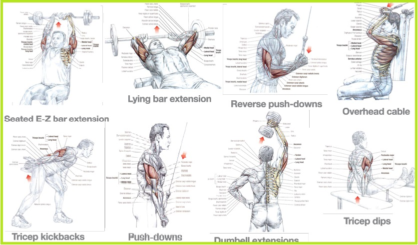 The Best Triceps Exercises - all-bodybuilding.com