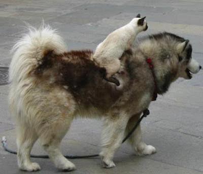 Paseo con el perro y el gato