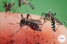 3 Alasan Mengapa Nyamuk Sering Terbang di Area Telinga dan Kepala