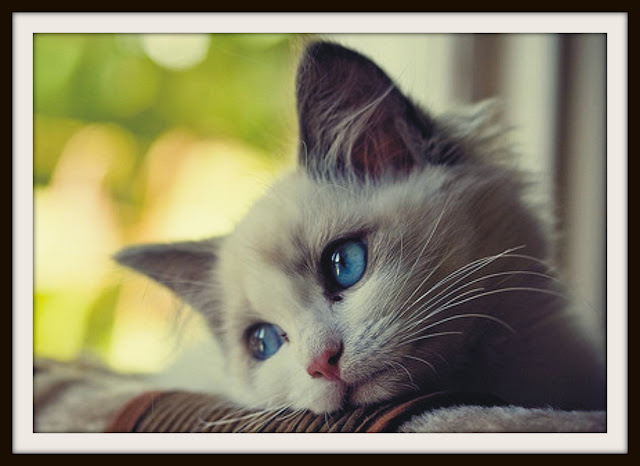 cat allergy symptoms