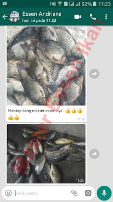 Umpan Pelet Aroma Lumut Untuk Ikan Nila