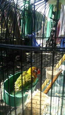 Manfaat Memandikan Burung Dengan Cara Dipegang