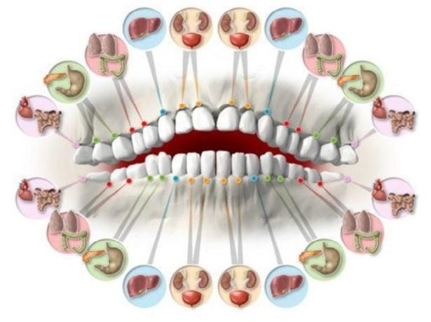 Chaque dent est associée à un organe dans le corps ! la douleur dans chaque dent peut prédire les problèmes dans certains organes!