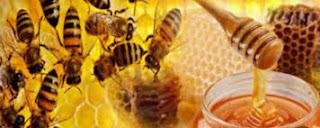 Anti Biotik Alami