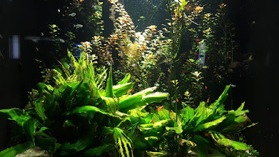 (Almost) Wordless Wednesday - The Berlin Aquarium