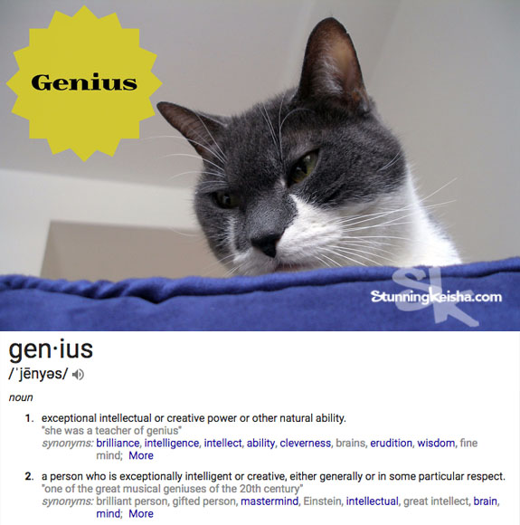 The Cat Proves She's a Genius