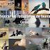 Consejos para mejorar tus fotografías de fauna I