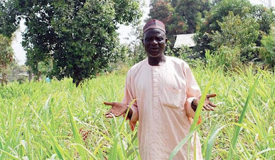 What Are the Benefits of Sugarcane Farming in Nigeria?