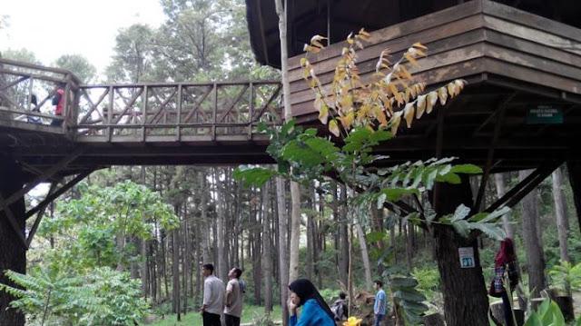 Taman Hutan Raya Saree (Tahura)