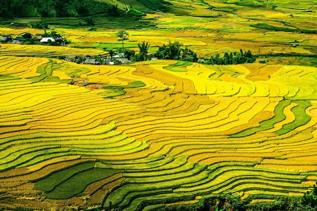 Northwest of September & the paradise of terraced fields 1
