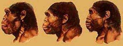 gambar wajah pithecantropus