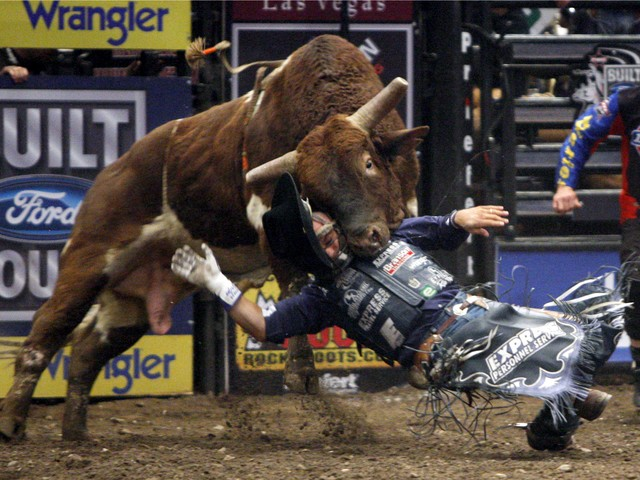 Bull riding at madison square garden ummm now what - Bull riding madison square garden ...