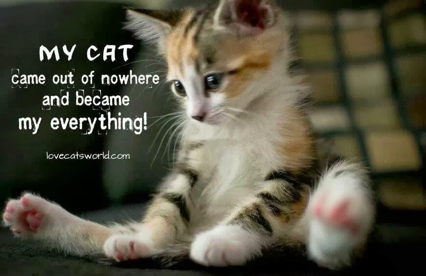 Cute Cat And Dog Quotes. QuotesGram