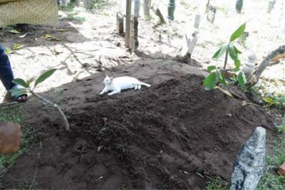Kenapa Alihkan Kucing Tu Dari Kubur Tok Wan?