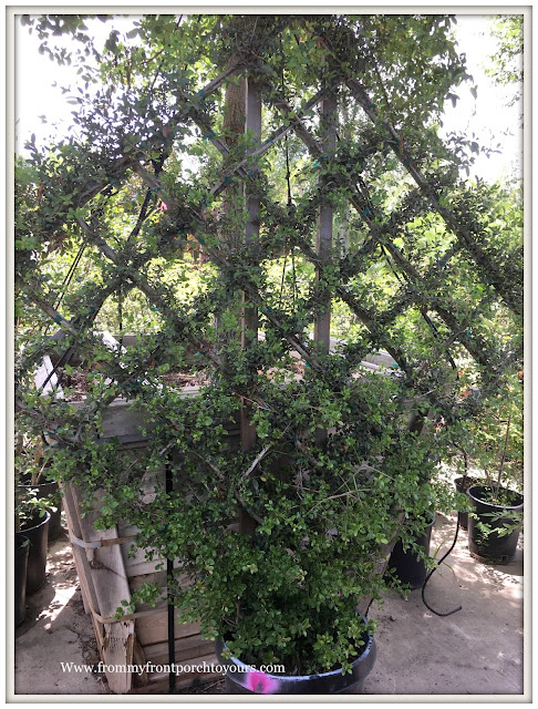 Oak Tree-Landscpaing-Trellis-Holly-From My Front Porch To Yours